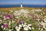 Wildflwers at North Head Lighthouse, Washington State, Pacific Ocean, Pacific Northwest Fotografisk trykk av Craig Tuttle