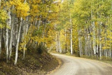 Aspens Lining Kebler Pass Road Photographic Print by Darrell Gulin