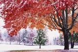 Autumn Snow Fotografisk trykk av Craig Tuttle