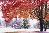Autumn Snow Photographic Print by Craig Tuttle