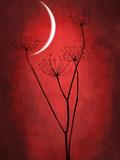 Rouge lune Art sur métal  par Philippe Sainte-Laudy