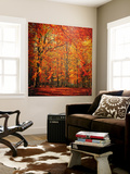 Red November Wall Mural by Philippe Sainte-Laudy