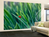 Lost in Green Wall Mural – Large by Marco Carmassi