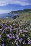 Oregon Coast and Douglas Iris Reproduction photographique par Darrell Gulin