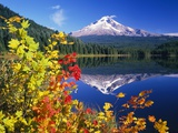Autumn Leaves Growing Near Mount Hood and Trillium Lake Fotografie-Druck von Craig Tuttle