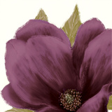 Grandiflora Blush II Giclee Print by Linda Wood