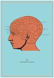 Phrenology Chart Posters