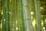 Bamboo and Bokeh II Reproduction photographique par Erin Berzel