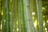 Bamboo and Bokeh II Photographic Print by Erin Berzel