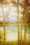 Waterfowl Lake Photographic Print by Roberta Murray