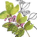 Berry Bloom II Giclée-Druck von Sandra Jacobs