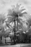 Kerala II Giclee-trykk av Bill Philip