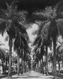 Palm Street Reproduction procédé giclée par Adam Brock