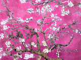 Van Gogh Almond Branches Pink Art Print Poster Plakater