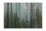 Wald I Fotografie-Druck von Kathy Mahan
