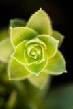Succulent Blossom II Reproduction photographique par Erin Berzel