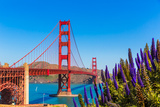 Golden Gate Bridge San Francisco Purple Flowers Echium Candicans in California Photographic Print by  holbox
