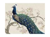 Peacock and Blossoms II Premium Giclee-trykk av Tim O'toole