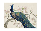 Peacock and Blossoms II Premium Giclee Print by Tim O'toole