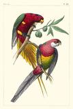 Lemaire Parrots III Kunstdrucke von C.L. Lemaire