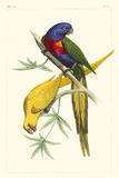 Lemaire Parrots IV Planscher av C.L. Lemaire