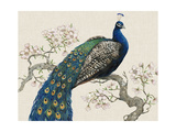 Peacock and Blossoms I Premium Giclee Print by Tim O'toole
