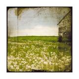 Field II Prints by Ingrid Blixt