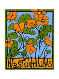 Nasturtiums, 2004 Impressão giclée por Megan Moore