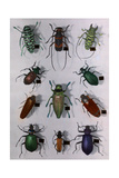 Collection of Various Beetles Fotografisk tryk af Edwin L. Wisherd