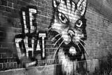 Le Chat Graffiti Foto