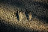 Bird Footprints in the Sand Fotografía
