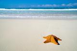 Caribbean Starfish over Sand Beach Fotografisk trykk av Vitaliy Pakhnyushchyy