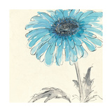Gerbera Blue II Posters by Chris Paschke
