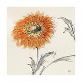 Orange Gerbera III Print by Chris Paschke