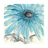 Gerbera Blue III Prints by Chris Paschke