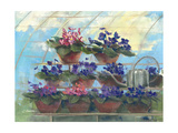 Violets Prints by Carol Rowan
