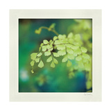 Natures Fern II Posters