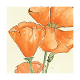 Sunshine Poppy III Posters af Chris Paschke