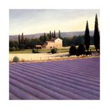 Lavender Fields II Crop Poster di Wiens, James