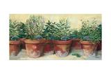 Potted Herbs I Kunstdrucke von Carol Rowan
