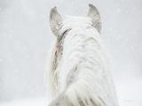 Winter Dreaming Impressão fotográfica por Lisa Cueman