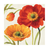 Poppies Melody III Affiches par Lisa Audit