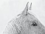 Snow Daze I Crop Lámina fotográfica por Lisa Cueman