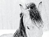 Snow Daze III Crop Bedruckte aufgespannte Leinwand von Lisa Cueman