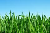 Lawn Isolated on Sky Fotografisk trykk av Vitaliy Pakhnyushchyy