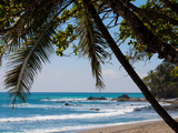 Costa Rica Beach with Tropical Palm Tree Photo Poster Print Poster