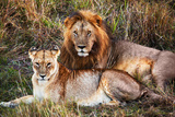 Male Lion and Female Lion - a Couple, on Savanna. Safari in Serengeti, Tanzania, Africa Fotografisk tryk af Michal Bednarek