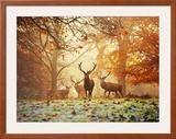 Four Red Deer in the Autumn Forest Poster by Alex Saberi