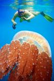 Snorkeling with Jellyfish Fotografisk trykk av  GoodOlga