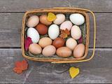 Basket of Eggs Fotografisk trykk